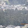 Turkey Vulture/gallinazo cabecirojo