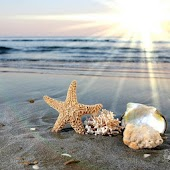 3D Beach shell HD LWP