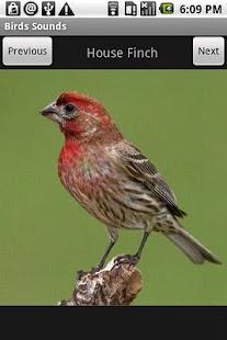 Free Birds Sounds- screenshot thumbnail