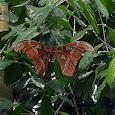 Singapore American School Rainforest
