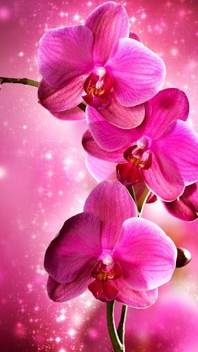 Orchid Bubbles