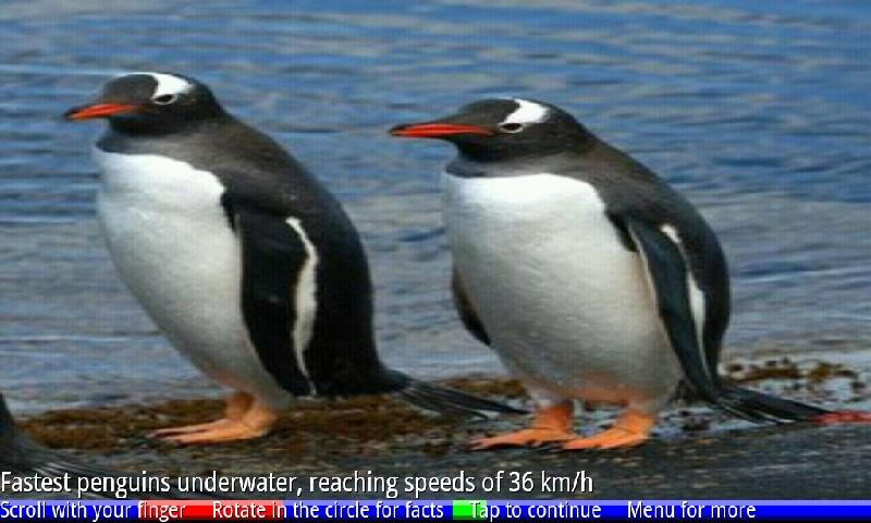 Penguins of Antarctica FREE- screenshot