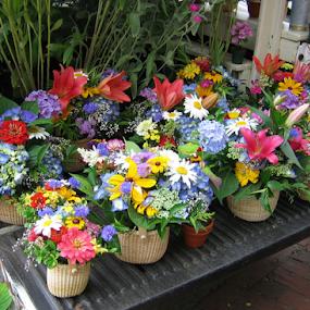 Nantucket Flower Baskets by Venetia Featherstone-Witty - Flowers Flower Arangements ( us east coast, flower baskets, yachting season, flower arrangements, nantucket, flowers,  )