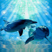 Happy Dolphins Live Wallpaper
