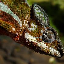 2011 Best Wildlife Photo