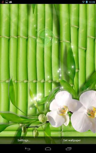 Green elegant wallpapers