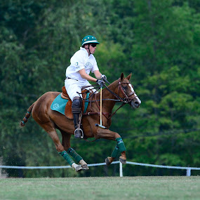Riding High In The Air by Nina VanDeleur - Sports & Fitness Other Sports ( polo )