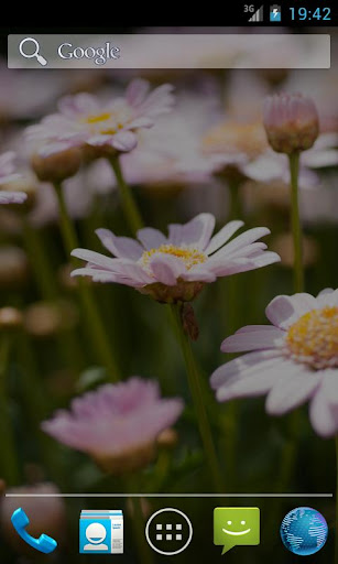 Flowers - Changing Wallpaper