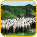 Sheep Wallpaper icon