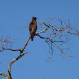Birds of Kasungu National Park, Malawi