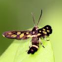 Wasp Moth? Hand Maiden Moth