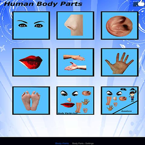 身体的任何部位 基本