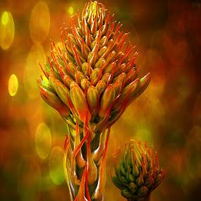 Aloe Vera. by Dave  Horne - Flowers Single Flower