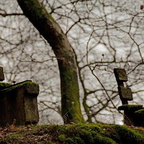 apart by Joachim Unger - Digital Art Places ( break, bench, isolation, divorce, split, woods, feelings )