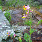 Little flowers of pink, orange, and yellow