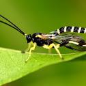 Case Moth Larvae Parasite Wasp