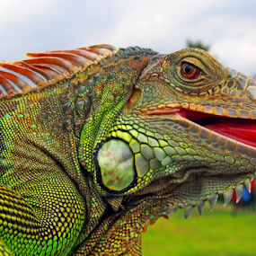 by Cacang Effendi - Animals Reptiles ( cattery, chandra, travel, reptile, animal )