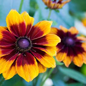 Flowers by Jordan Crick - Flowers Flowers in the Wild ( canon, van dusen gardens, ef 70-300mm, nature, canada, plants, bc, lens, vancouver, flower )