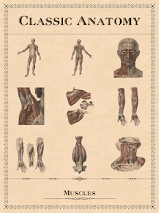 Classic Anatomy- screenshot thumbnail