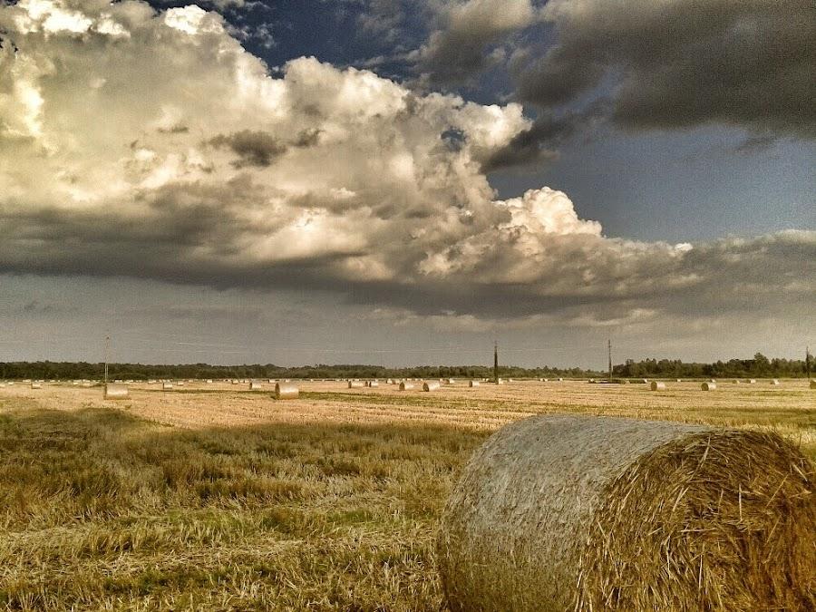 Field of Hay before the Storm by Nat Bolfan-Stosic - Uncategorized All Uncategorized ( clouds, field, hay, storm, rain )
