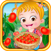 Baby Hazel Tomato Farmings