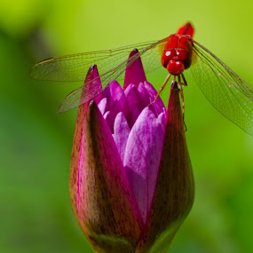 What are you looking at? by Jane Chen - Animals Insects & Spiders