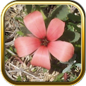 Free Wild Flowers Puzzle Games icon