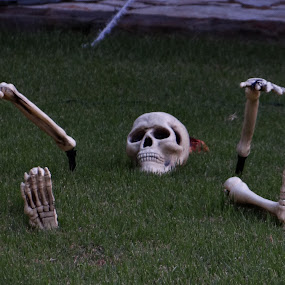 Los restos de halloween by Lidia Noemi - Public Holidays Halloween ( jardin, festejo, esqueleto, halloween,  )