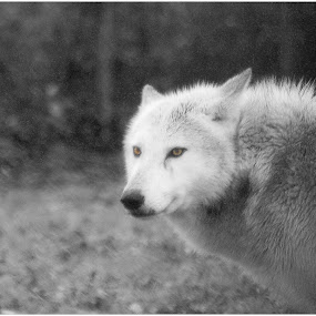 watching by Tracy Bruzas - Animals Other