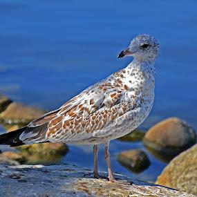 Taken at Regina by Abhishek Ghosh - Animals Birds