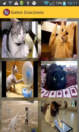 Videos de Gatos Graciosos