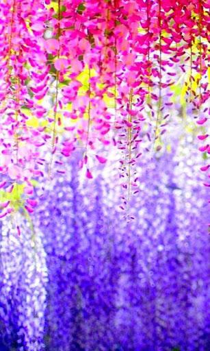 【免費個人化App】Petals live wallpaper-APP點子