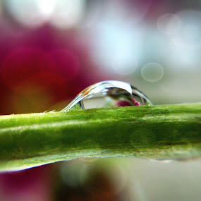 will never give up.. by Rayna Brilliantsyah - Nature Up Close Natural Waterdrops