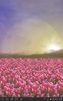 Screenshot of Tulip Field Live Wallpaper