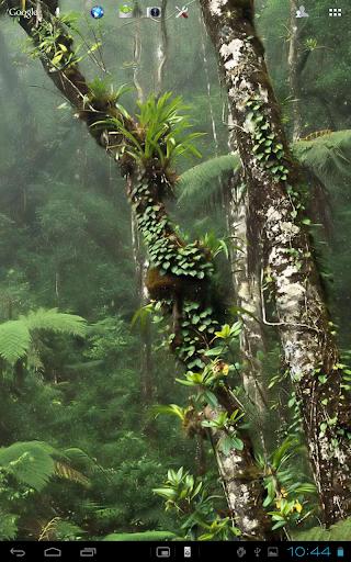 Nature Rainfall Live Wallpaper