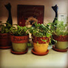 Basil, dill, cilantro and parsley