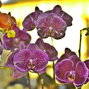by Abdul Salim - Flowers Flower Arangements