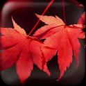 Colorful Seasons Wallpaper logo