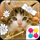 Cat Wallpaper Chaton icon