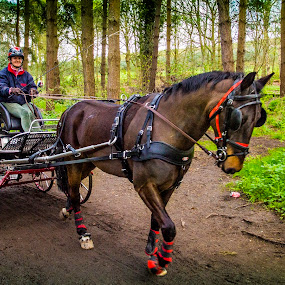 Horse and Trap, Delamere Forset by Ian Yates ヅ - Transportation Other ( tree, horse, wagon, carthorse, trees, cart, forest, woods, trap, bridleway, lane )
