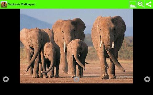 Elephants Wallpapers - screenshot thumbnail