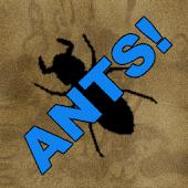 ANTS!