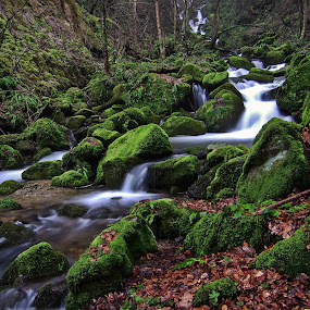 Wondrous forest V by Zoran Rudec - Landscapes Waterscapes ( forest waterfall )