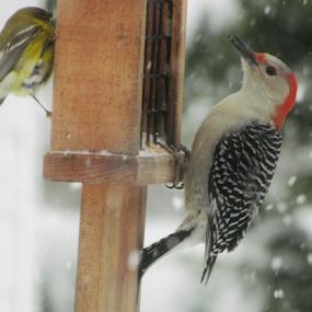 Sharing by Alan Hammond - Animals Birds ( birds )