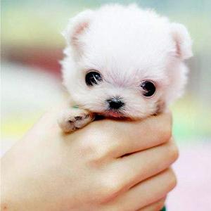 App Puppy Dogs Pics APK
