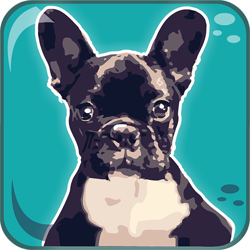 Dogs Breeds: Quiz