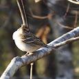 Georgia Bird Life