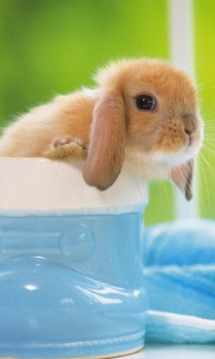 毛茸茸的小兔子壁紙