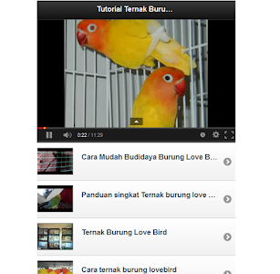 Tutorial Ternak Lovebird screenshot 1