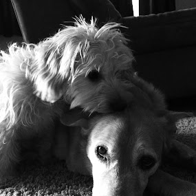 Acceptance by Gina Conger - Animals - Dogs Portraits